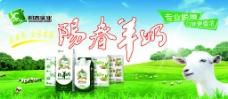 阳春羊奶 (注分层不细)图片