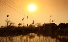 太湖夕阳下的芦苇图片