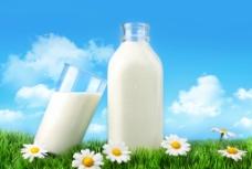 蓝天白云绿野菊花牛奶图片