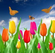 蓝天白云鲜花蝴蝶图片