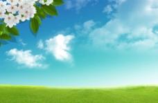 蓝天白云绿野鲜花图片
