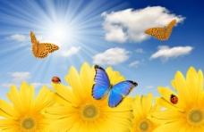 蓝天白云鲜花蝴蝶瓢虫图片