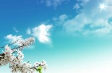 蓝天白云樱花图片