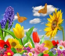蓝天白云鲜花蝴蝶向日葵图片
