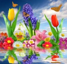 水波荡漾中的鲜花蝴蝶图片