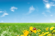 蓝天白云绿野鲜花瓢虫图片