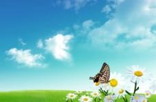 蓝天白云绿野菊花蝴蝶图片