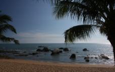 海边椰林图片