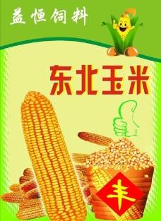 东北玉米图片