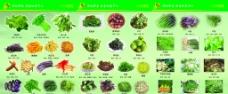 野菜折页图片