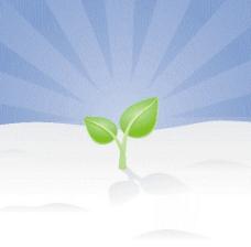 成长的绿苗