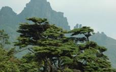 贵州梵净山 迎客松图片