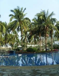 游泳池 椰树图片