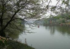 樱花湖畔图片