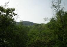 美丽的舜耕山 绿油油景色连成片图片