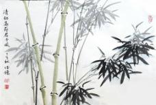竹子 邱德镜图片