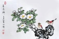 山茶花 邱德镜图片