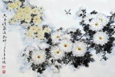 黄菊花 邱德镜图片