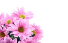 粉色鲜花图片