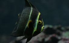 海底中的鱼图片