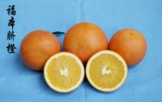 福本脐橙图片