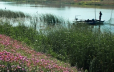 岸边的野花图片