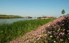 夏日的野花图片