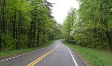 林中公路图片