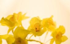 黄色鲜花图片
