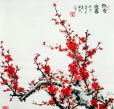 傲雪迎春图片