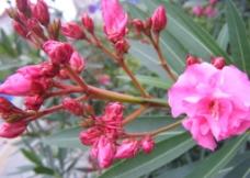 红花朵图片