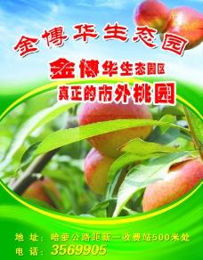 绿色水果宣传页图片