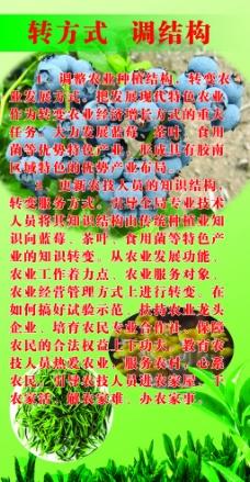 蓝莓 绿茶展板图片