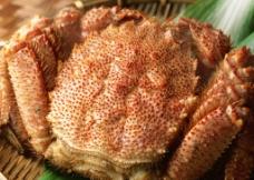 长毛蟹图片