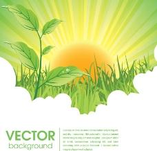 朝阳下的草地绿叶水珠图片