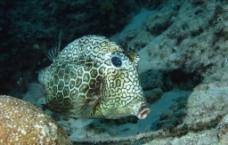 海洋鱼类图片