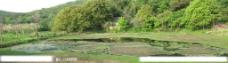翡翠般风景图片