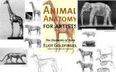 动物解剖图片