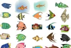 海洋魚图片