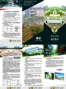 东南大学三折页图片