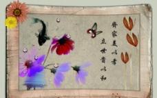 画框鱼蝴蝶花图片