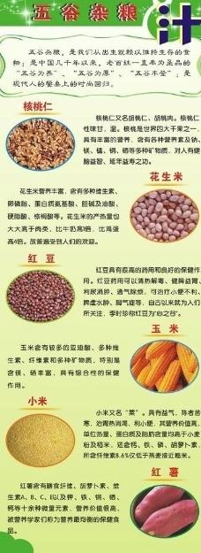 五谷杂粮的营养价值(易拉宝)图片