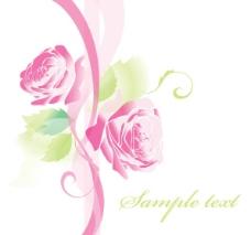 玫瑰花背景图片