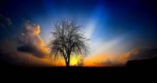 树背后的阳光图片