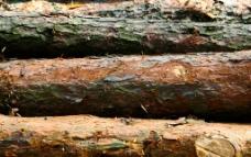 建筑木料图片