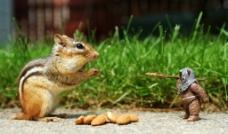 可爱 松鼠 榛果 卡通小人图片
